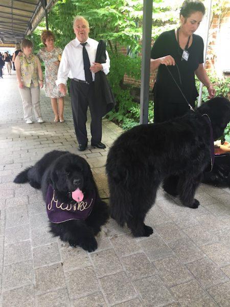 Die Hunde fürs Vorspiel der Meistersinger von Nürnberg.